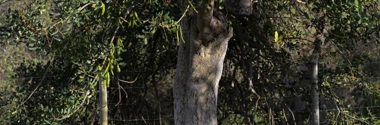 Fruit- en olijfbomen Casa Cuco Portugal